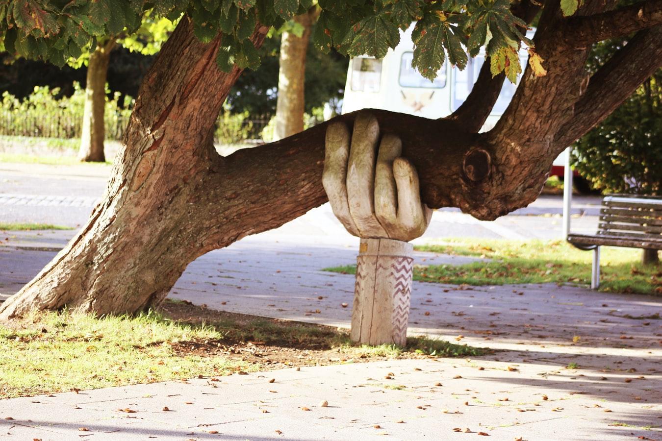 木が倒れない様にサポート